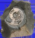 ホームページの化石化